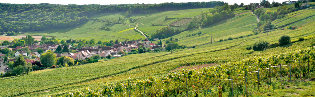 Chateau-Thierry's vineyards are known for a high concentration of Pinot Meunier grapes. Photo Courtesy: Northern France Tourism-Vincent Colin