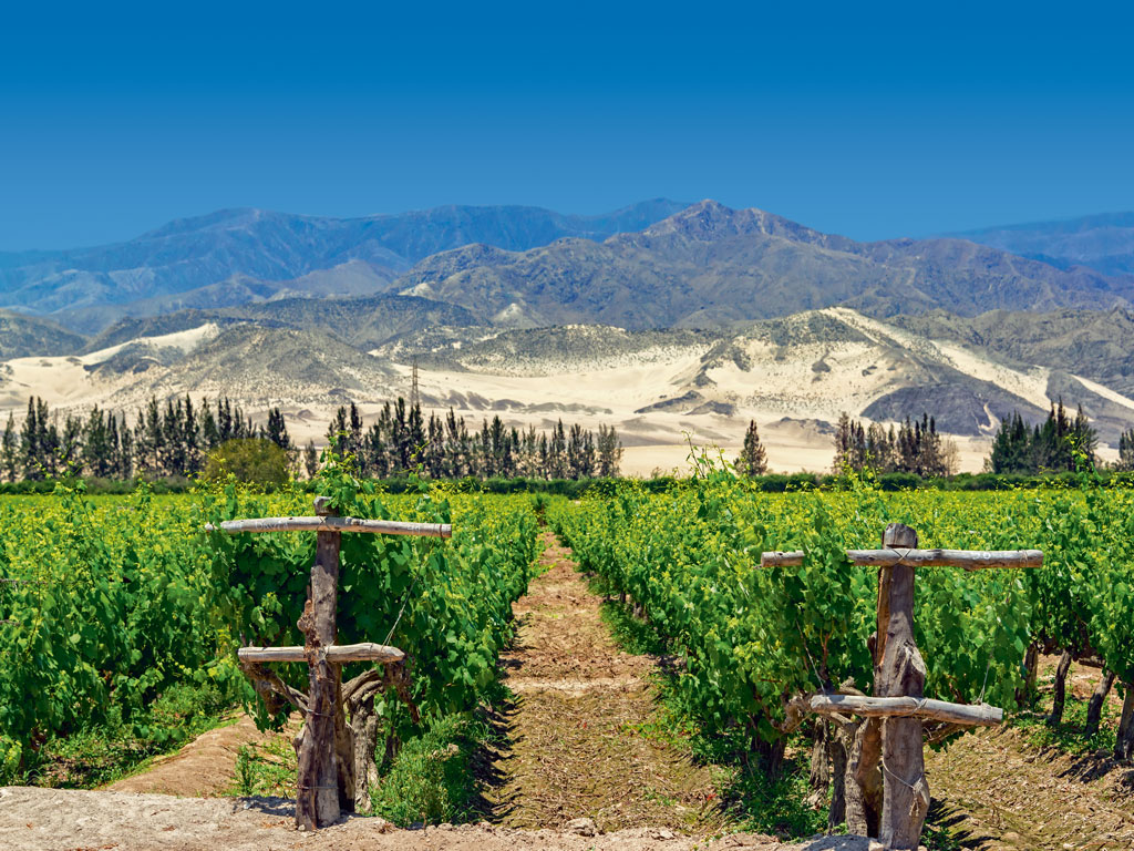 The goodness of sunny, sandy Ica is bottled into some of the best Peruvian pisco. Vast vineyards thrive in this fertile valley at the foothills of the Andes, and  haciendas serve up award-winning spirits. Photo by: Beatriz Velarde La Rosa/Getty Images