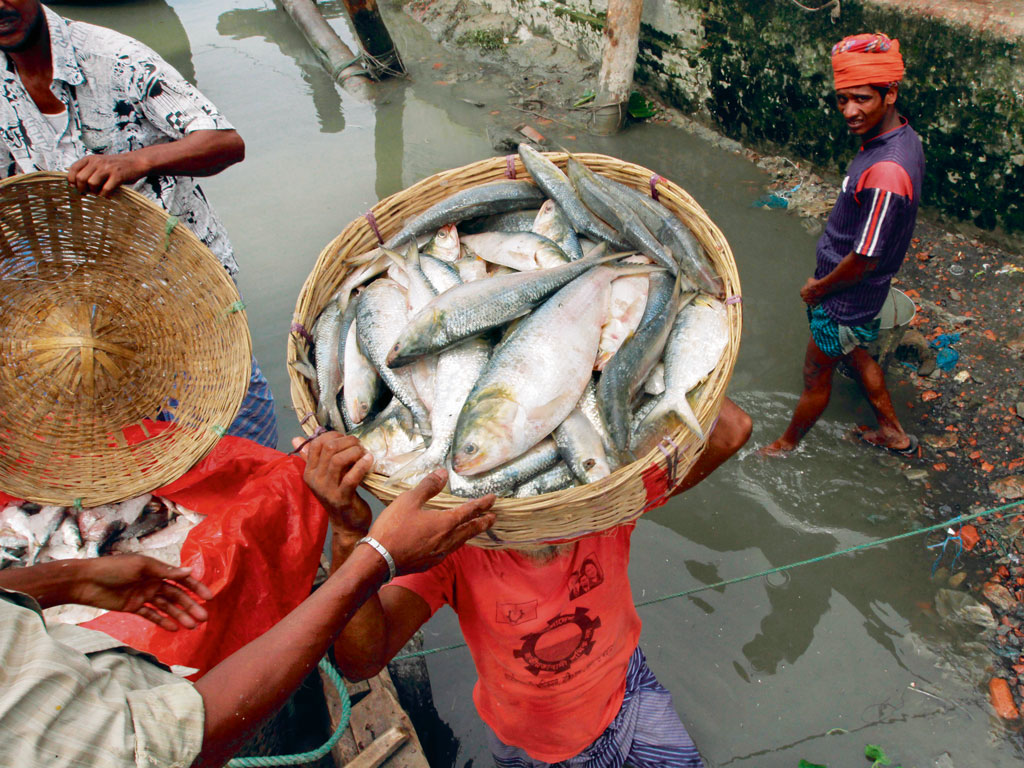 Fresh catch is sold along many of the river islands. Photo by: lead foto/Alamy/IndiaPicture