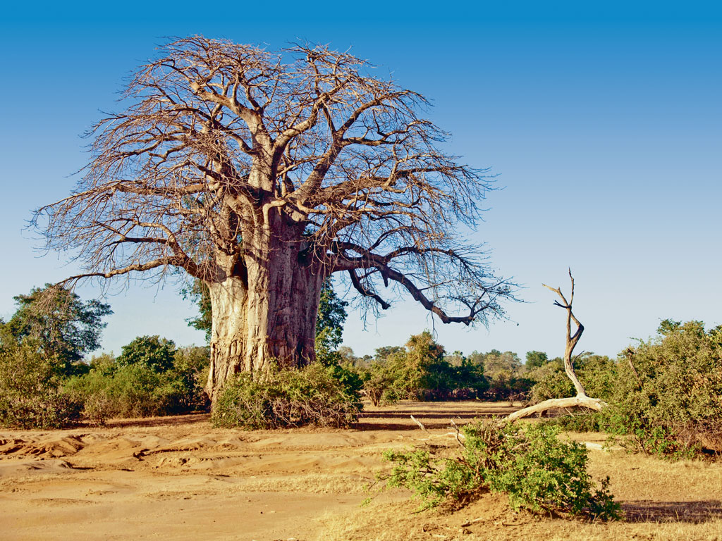 It's also a land of diverse scenery, alternating between savannahs dotted with baobab trees, grasslands and shrub lands. Photo by: Marc Rasmus/ImageBroker/Dinodia Photo Library