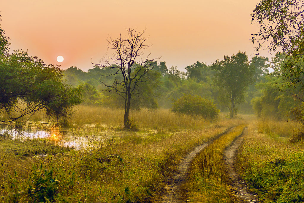 Villagers in and around the reserve love and respect the forest deeply, so much so that the water of Tadoba lake is considered sacred and sprinkled on fields to protect crops and ward off pests.
