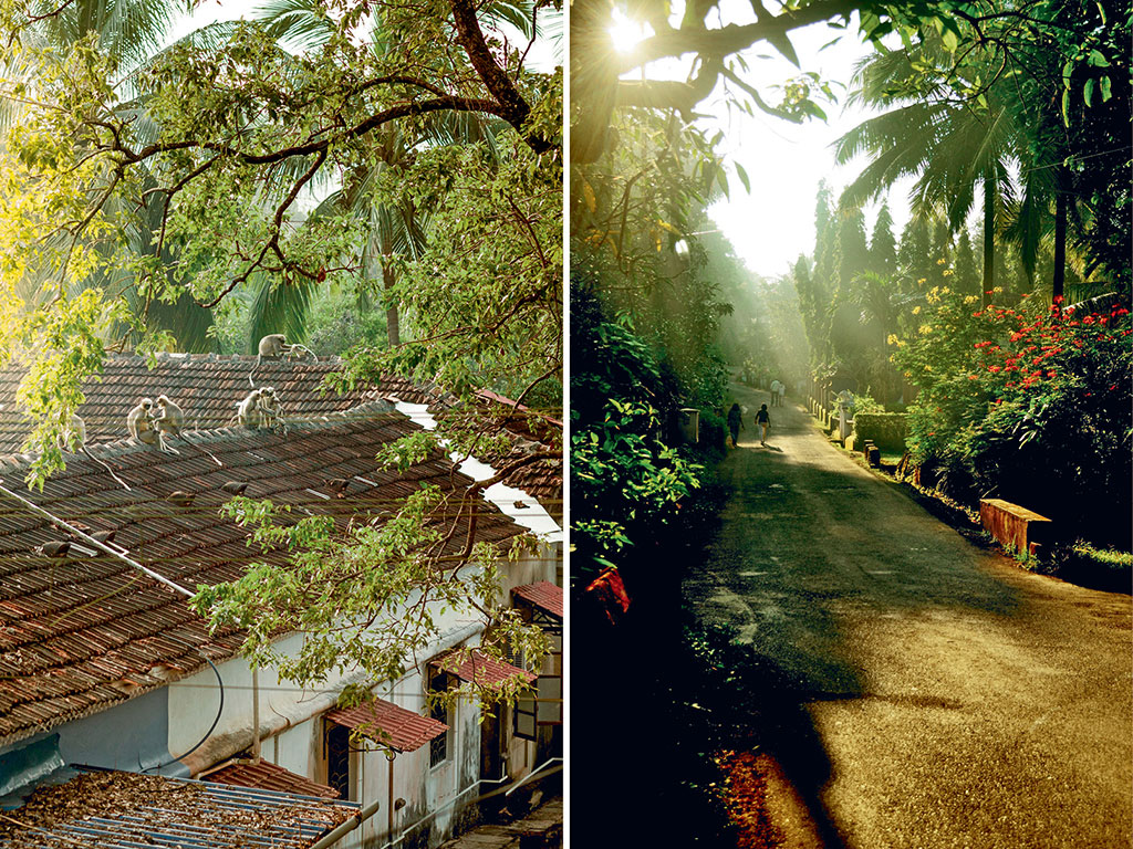 Assagao has many early risers, from walkers ambling down palm tree-flanked pathways (right) to langurs (left) on Villa Blanche Bistro's rooftop.