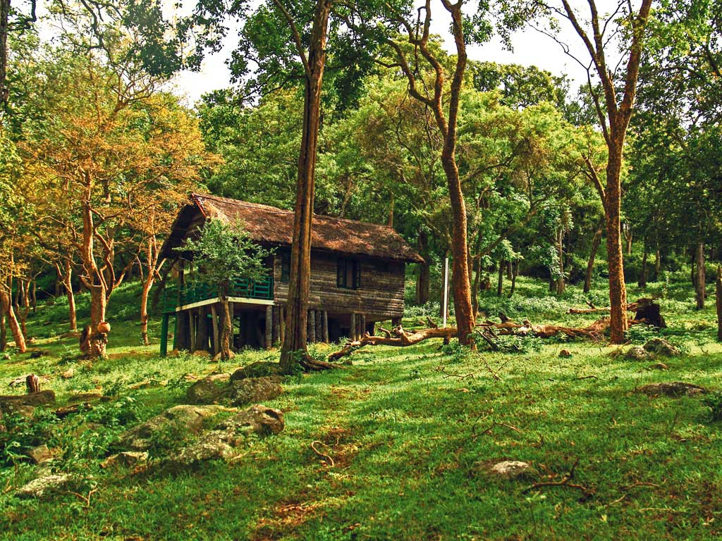 Forest Stay: Log Huts and Tented Cottages at Kyathadevara Gudi Jungle Lodge, Karnataka
