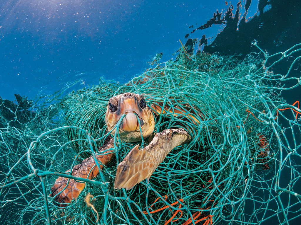 For Animals, Plastic Is Turning the Ocean Into a Minefield 1