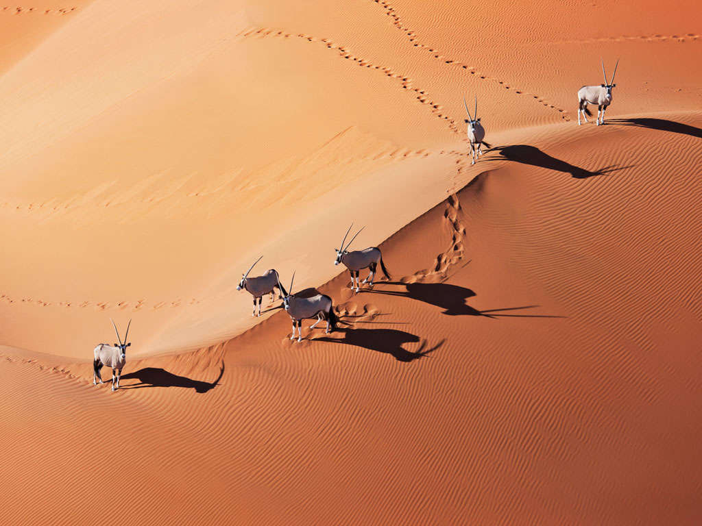 Under African Skies: A Guide to Unconventional Wildlife Safaris 1