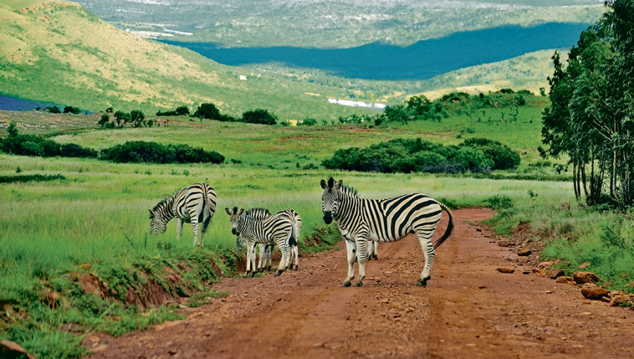 The Ultimate South Africa Road Trip: From Johannesburg to Kruger 2