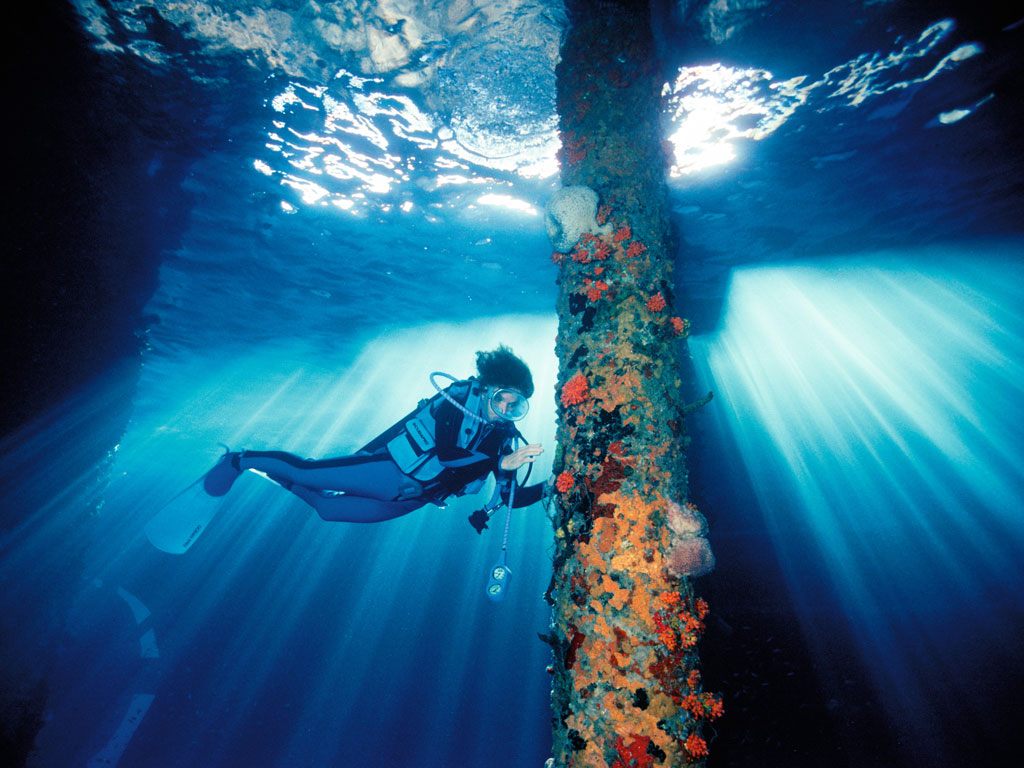 Rolex Testimonee Dr. Slyvia Earle on a Mission To Save The Seas