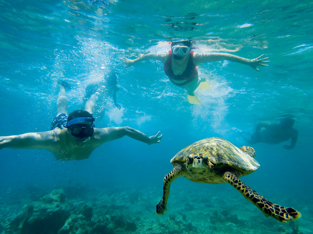 Swimming with turtles in the Maldives