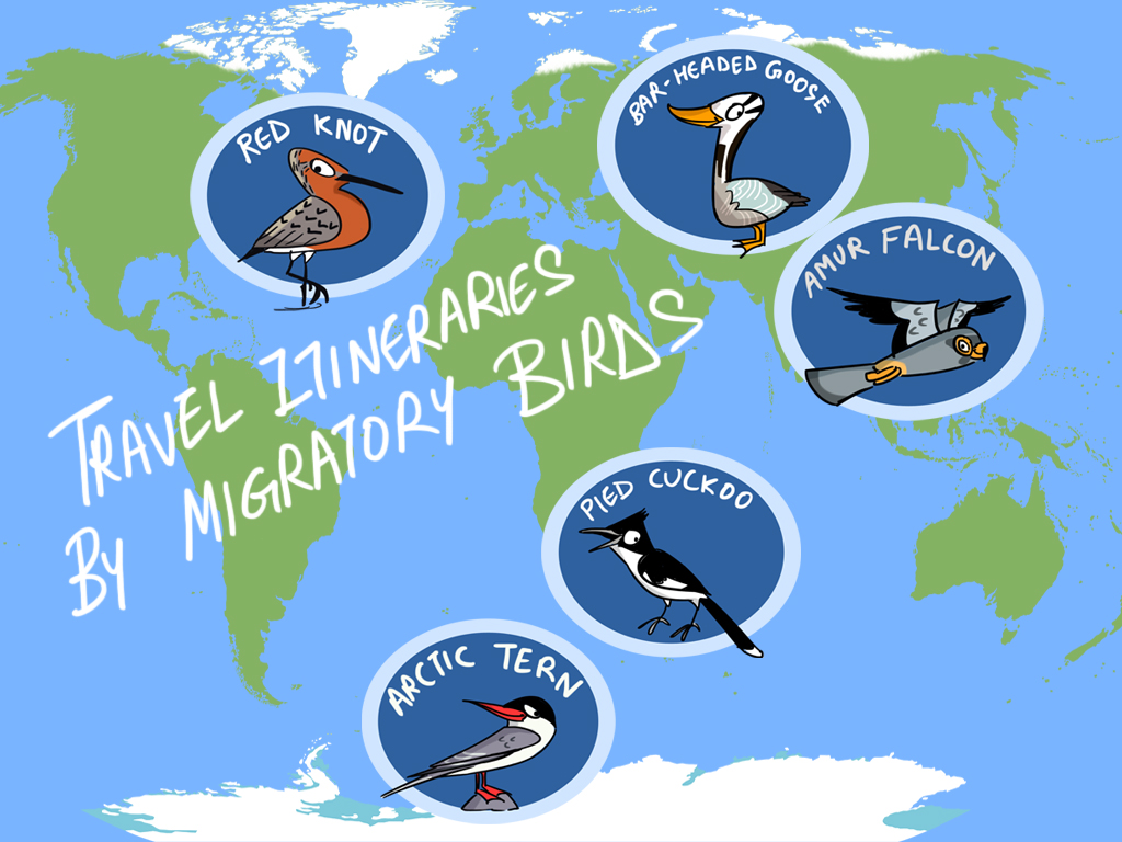 Photo Story | Travel Itineraries by Migratory Birds