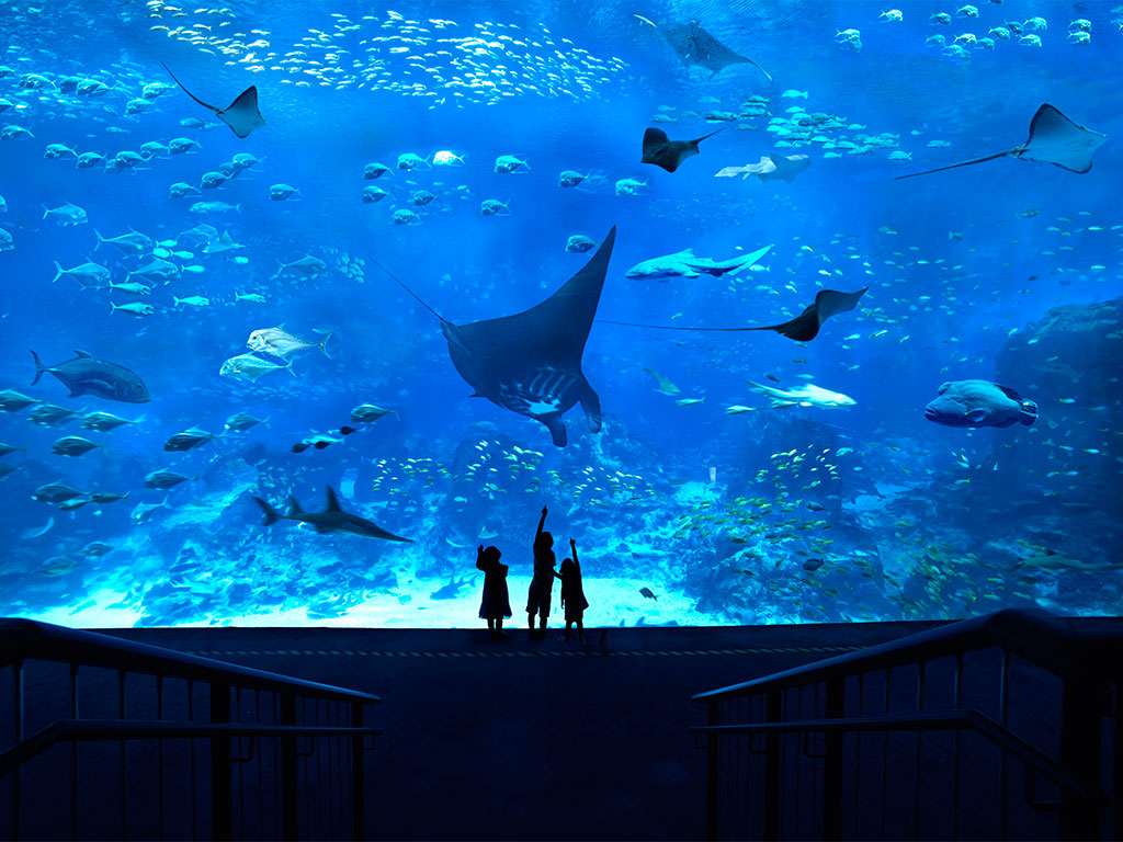 A Glimpse of Life Underwater at S.E.A. Aquarium™ at Resorts World Sentosa™ 1
