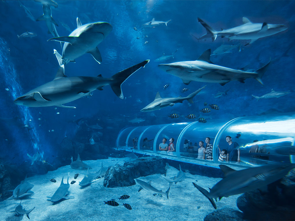 A Glimpse of Life Underwater at S.E.A. Aquarium™ at Resorts World Sentosa™ 2