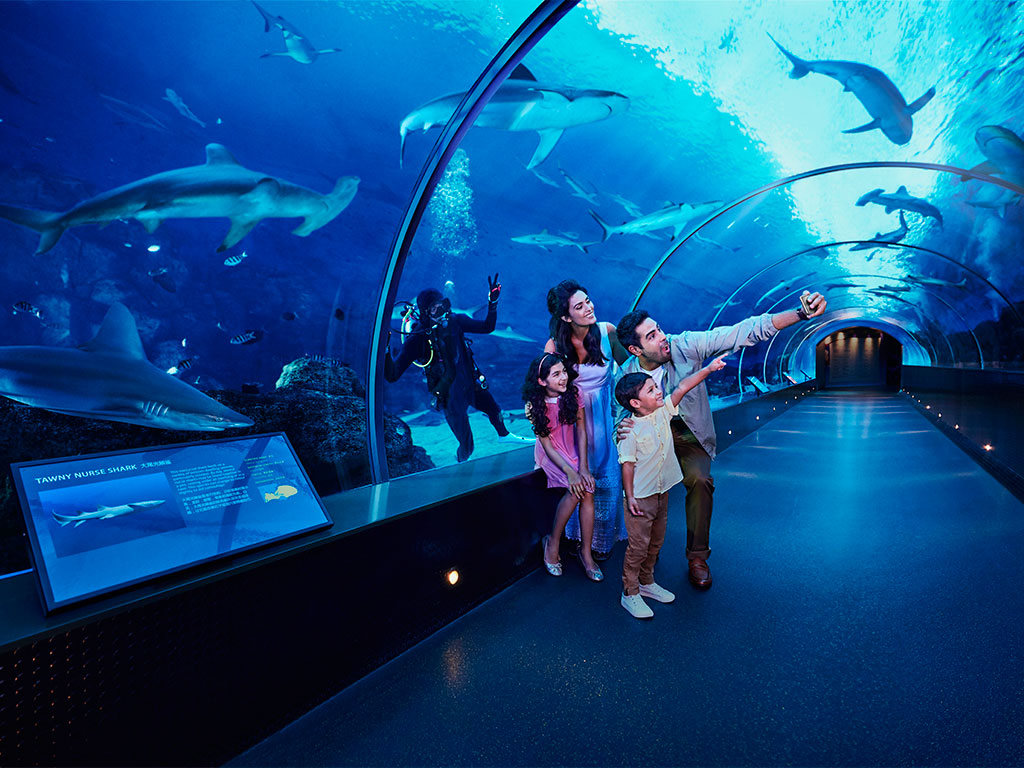A Glimpse of Life Underwater at S.E.A. Aquarium™ at Resorts World Sentosa™