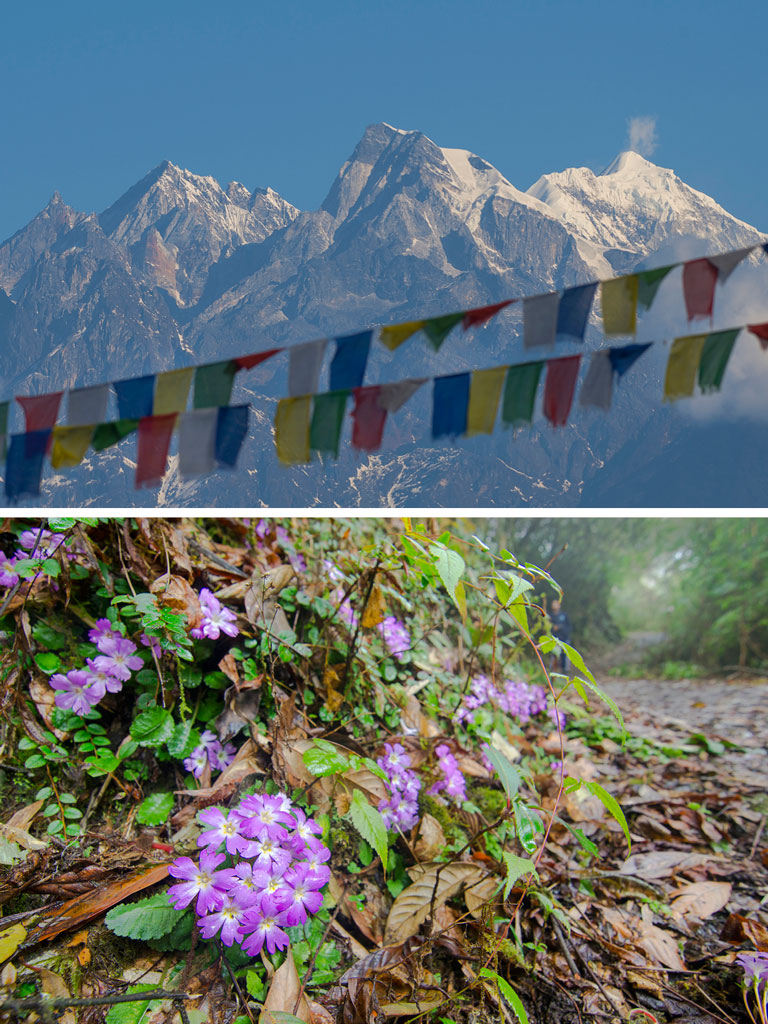 Nature Trail: The Joys of Spring in Sikkim