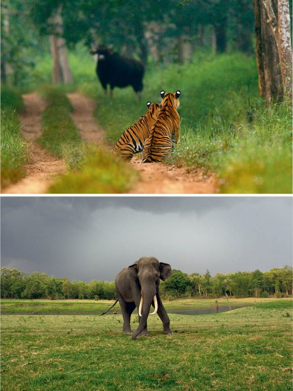 Forest Getaway | Home of the Wild in Bandipur 2