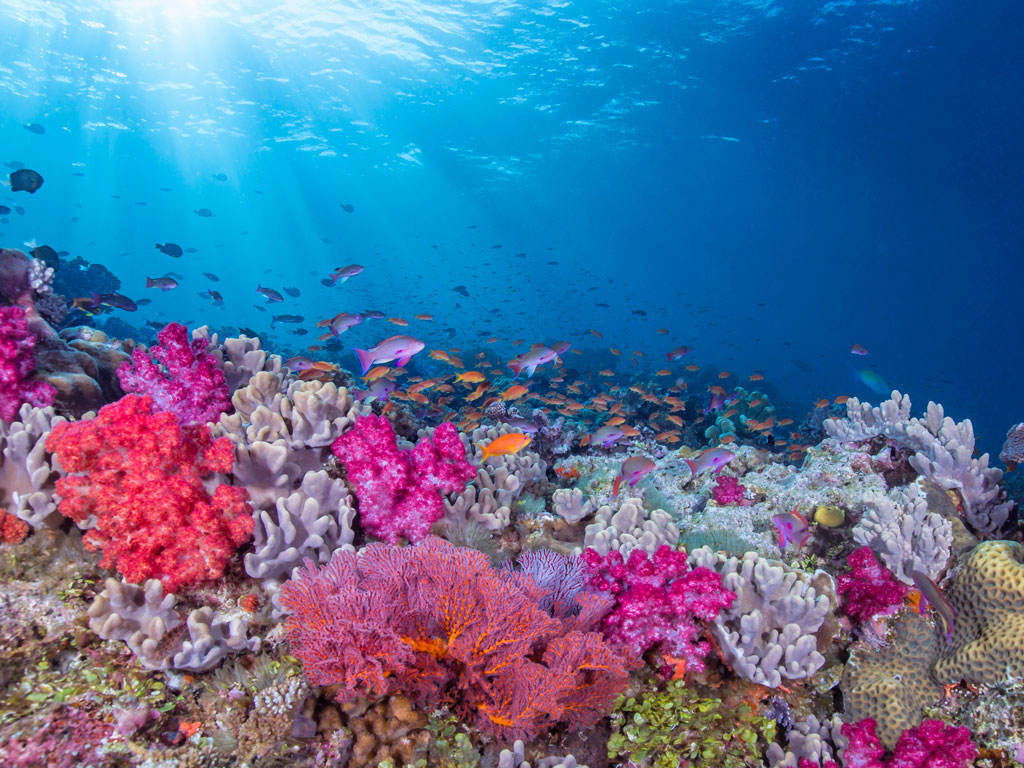 Sponsored | Diving into Sustainability: Fiji 1