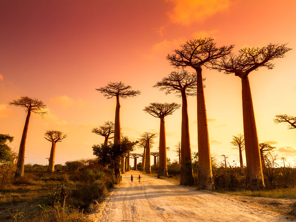 Sponsored: Six Unforgettable Experiences in Madagascar 2