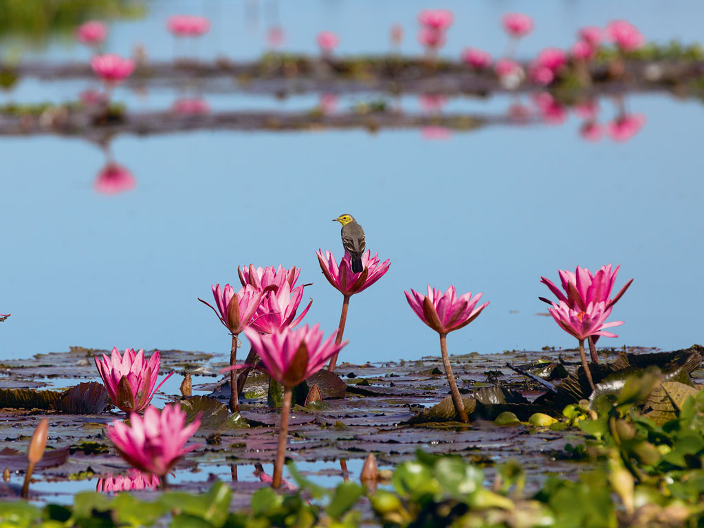In Photos | A Bird's Eye View in Assam