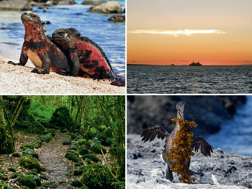 The Secret Life On The Galápagos 1