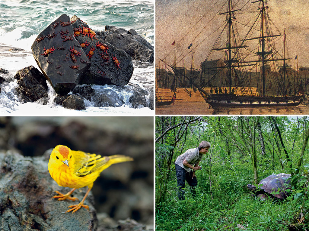 The Secret Life On The Galápagos