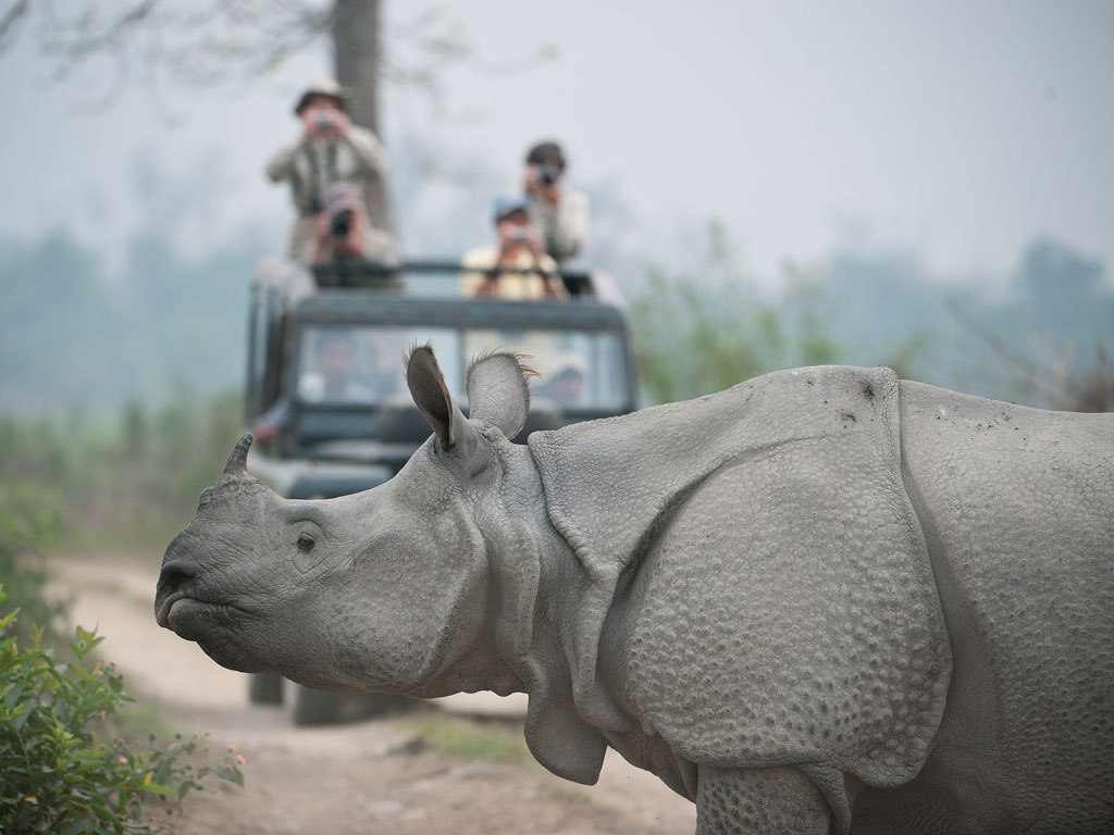Kaziranga National Park Reopens after Monsoon Break