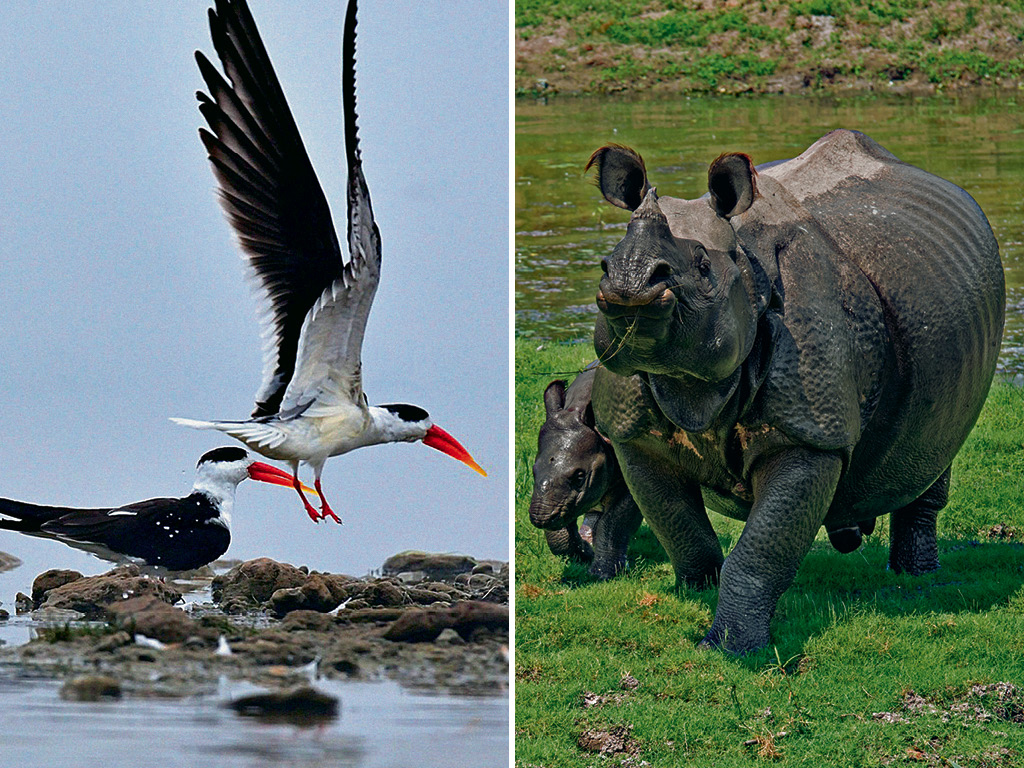 Where To Go in 2020: For Soaking in Forests and Wildlife-Watching in India 1