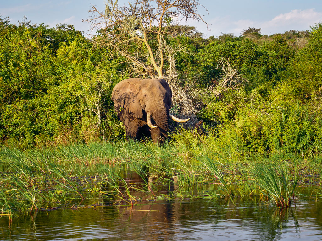 Three African Lodges Lead the Way in Wildlife Conservation 6