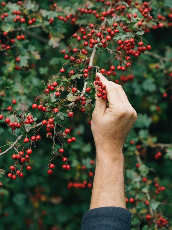 How Urban Foraging Became The New Way to Explore a City 1