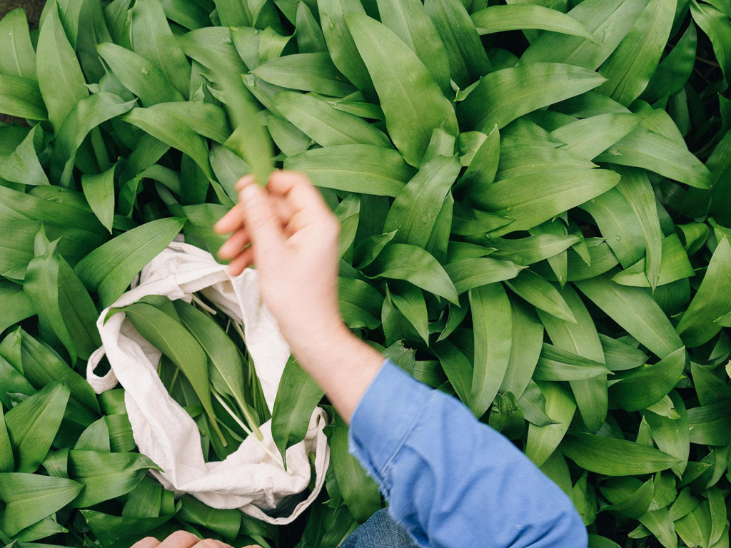 How Urban Foraging Became The New Way to Explore a City 6