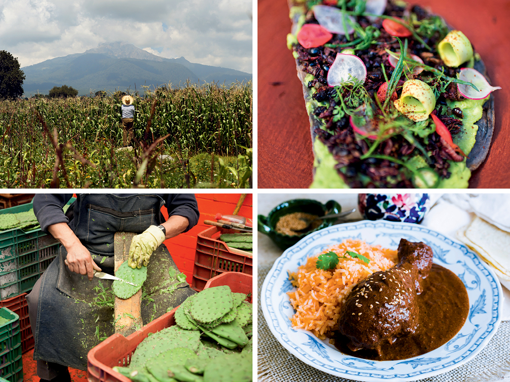 Food Fiesta: A Culinary A-Z of Mexico 4