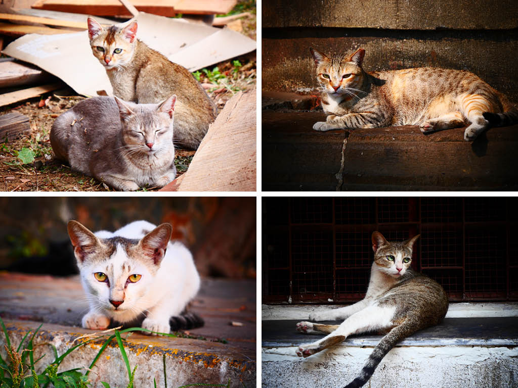 Street Joy: Chasing Mumbai's Cool Cats 2