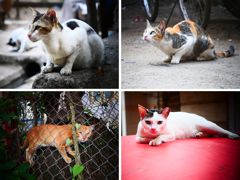 Street Joy: Chasing Mumbai's Cool Cats 3