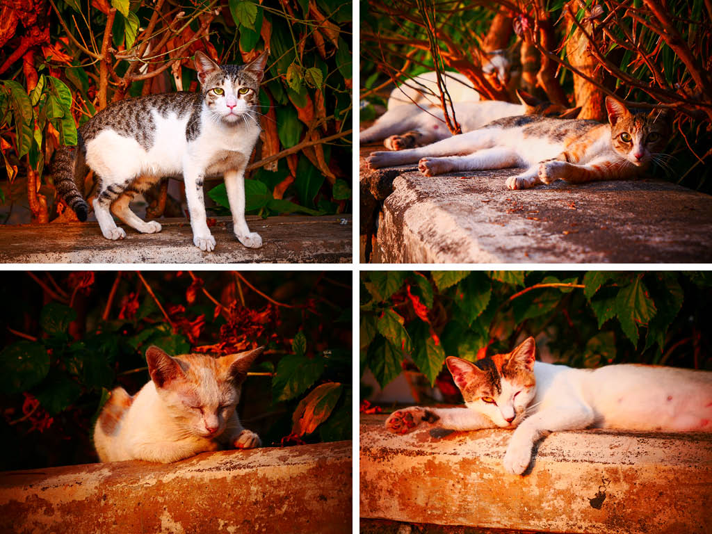 Street Joy: Chasing Mumbai's Cool Cats 5