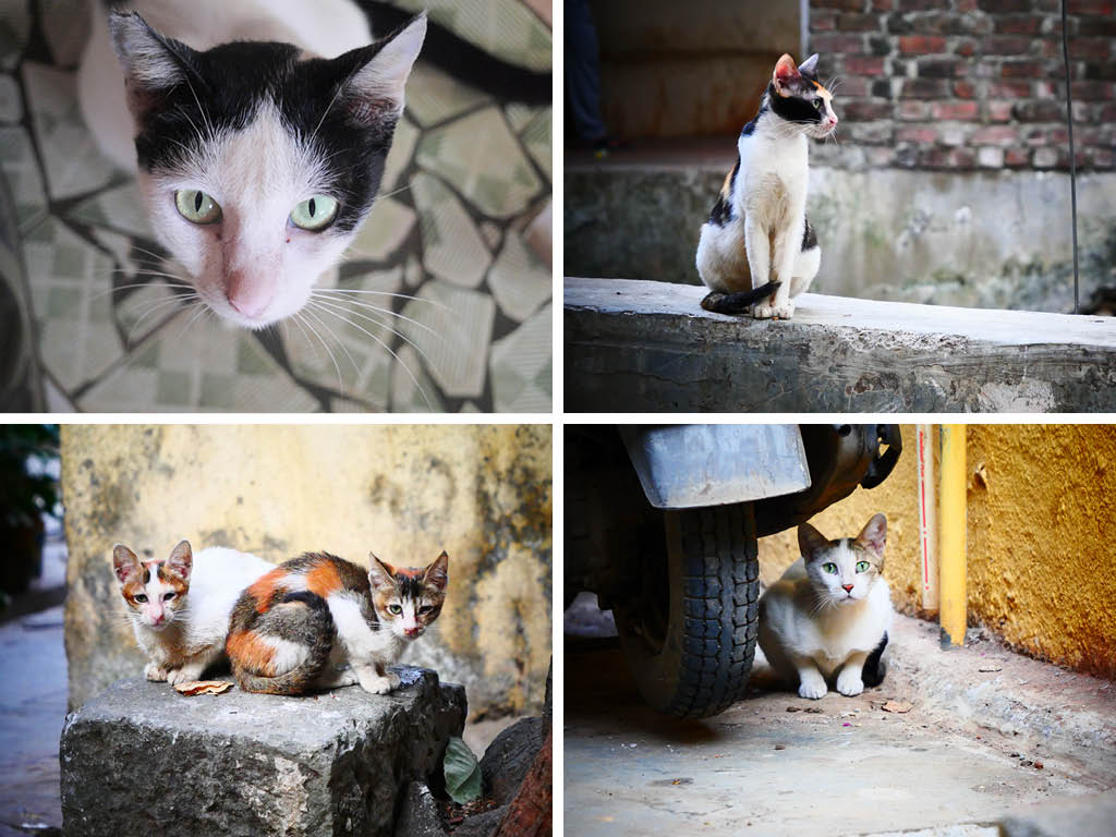 Street Joy: Chasing Mumbai's Cool Cats