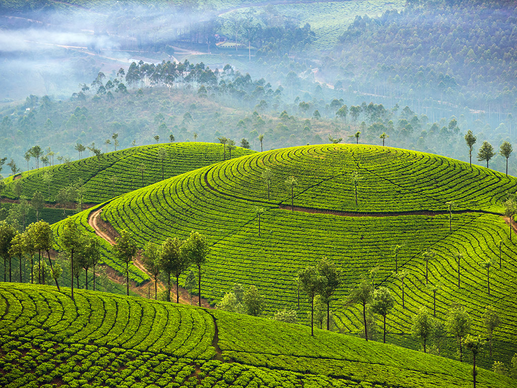 News Alert | You Can Now Plan Your Next Vacation to Kerala