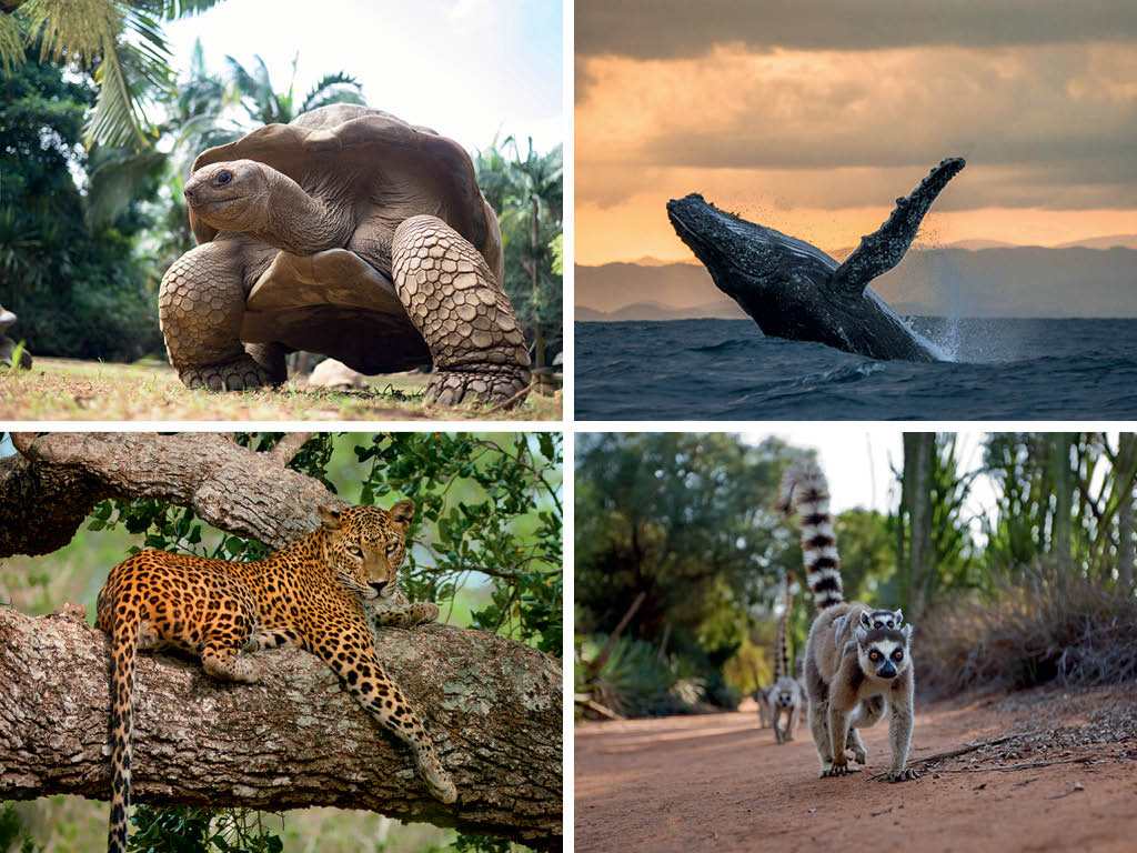 The A to Z of the Indian Ocean 7