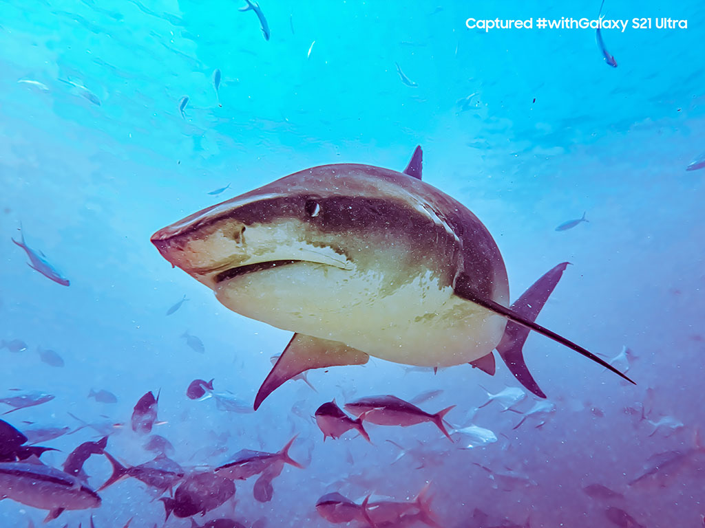Partner Content | #UncoverTheEpic | Shark diving with Galaxy S21 Ultra 5G 1