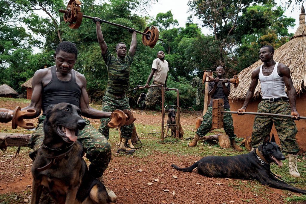 Dogs Ivory Africa