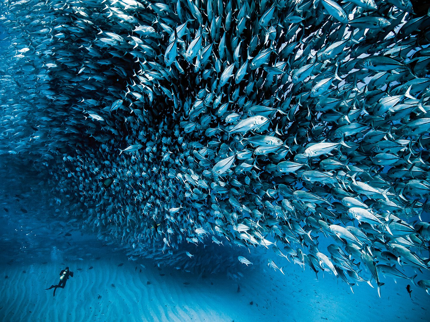 Sea of Cortez Fish