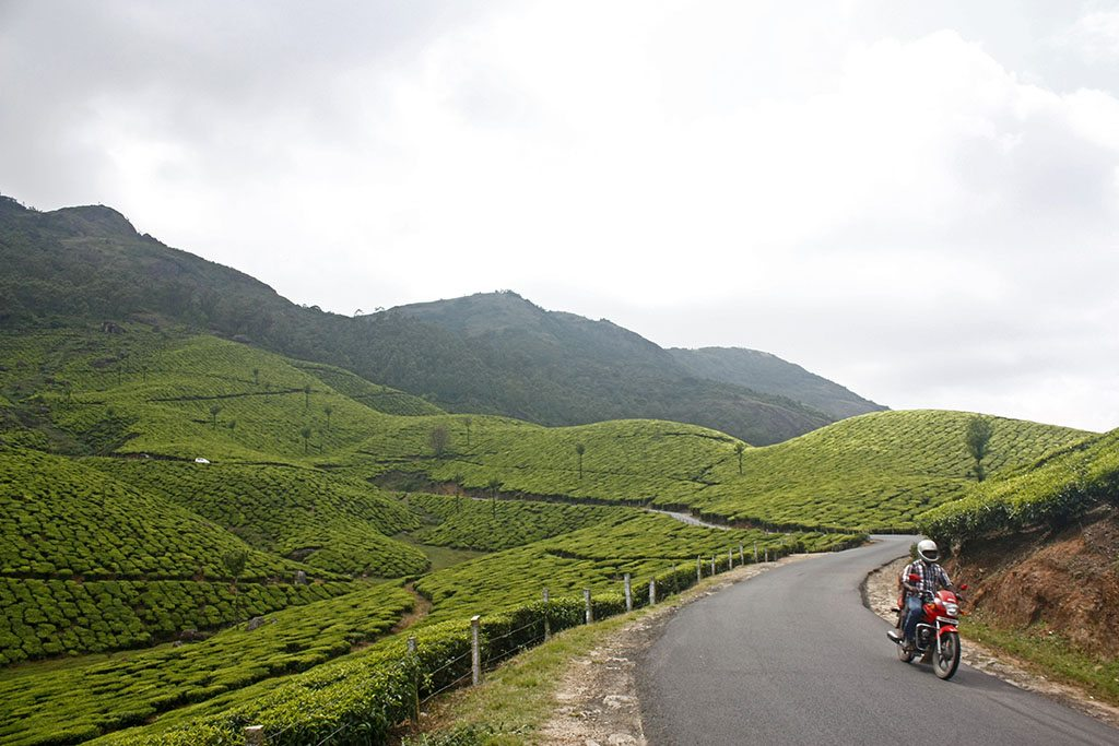 Tea plantation Nilgiri