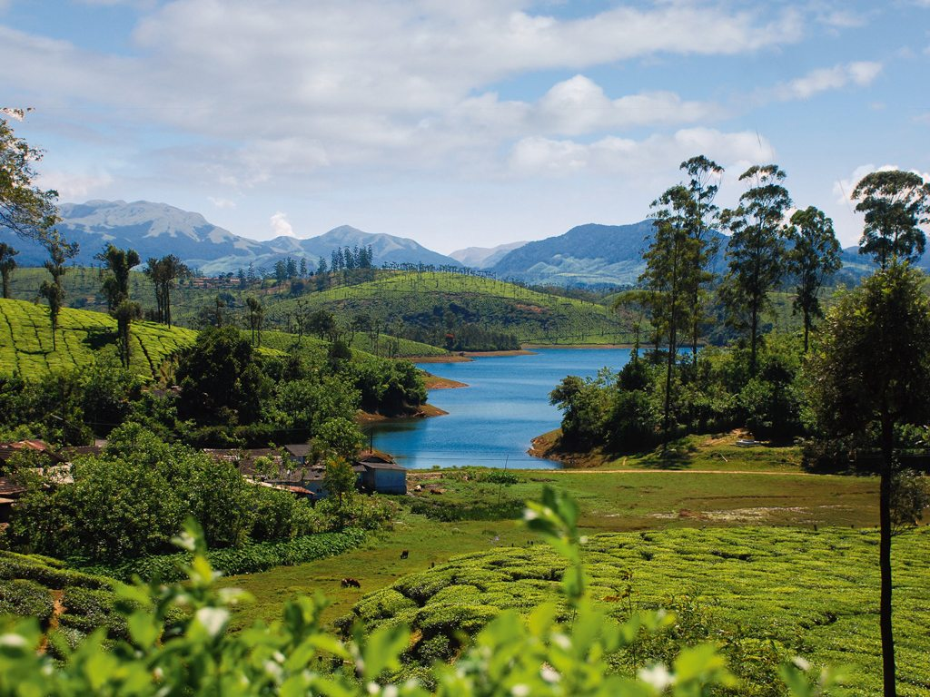 Road-Tripping Through Misty Trails in South India