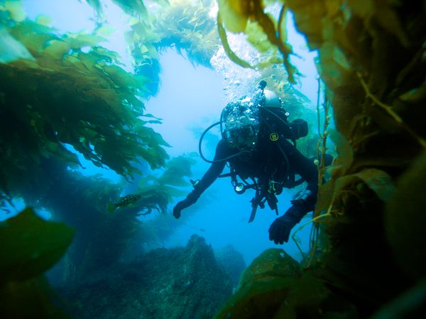 catalina island diving