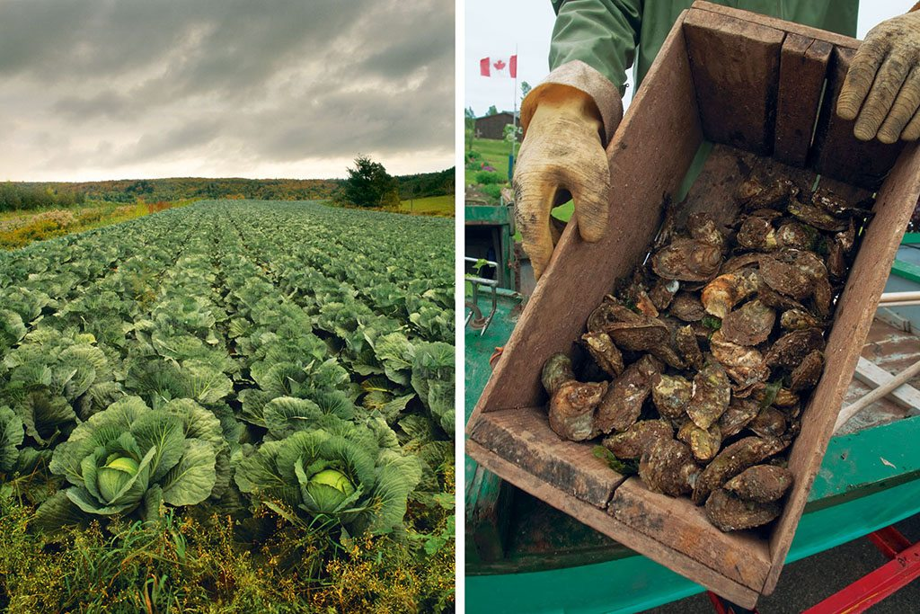 Tourists can pick produce straight from the field (left). P.E.I.'s famous Raspberry Point oysters (right) take about six years to mature. Photos: Darwin Wigget. First Light/Corbis/Imagelibrary (cabbage field) Dave Bartruff/Genesis Photos/Corbis (oysters)