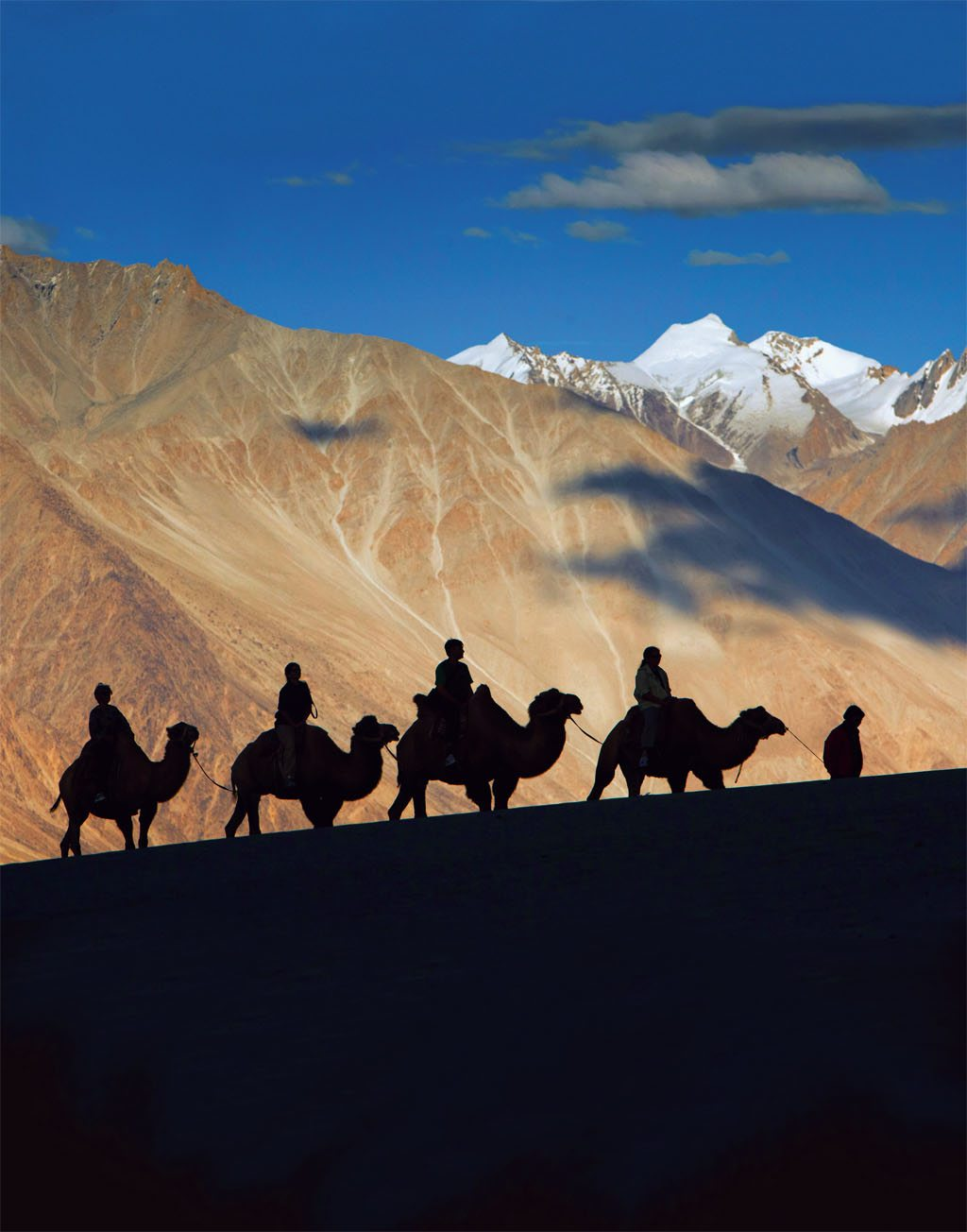 Cached Nat geo camel photo