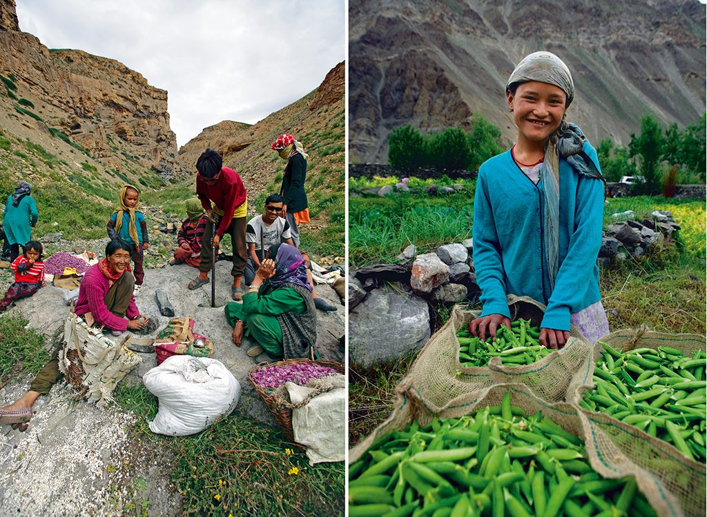 Farming in Spiti Valley, Himachal Pradesh