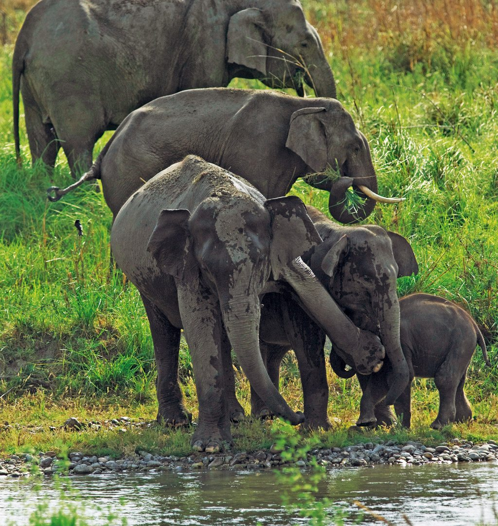 Elephants India Western Ghats Forest
