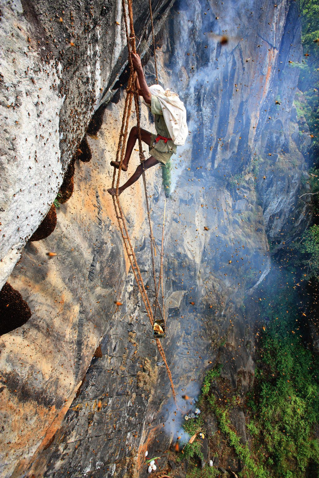 A honey gatherer of the Irula tribe in the Nilgiri hangs precariously along the side of a cliff from a rope ladder he wove himself. The giant rock bees build their hives under protected overhanging sections, making the honey gatherer's task rather dangerous. Photo: Eric Tourneret