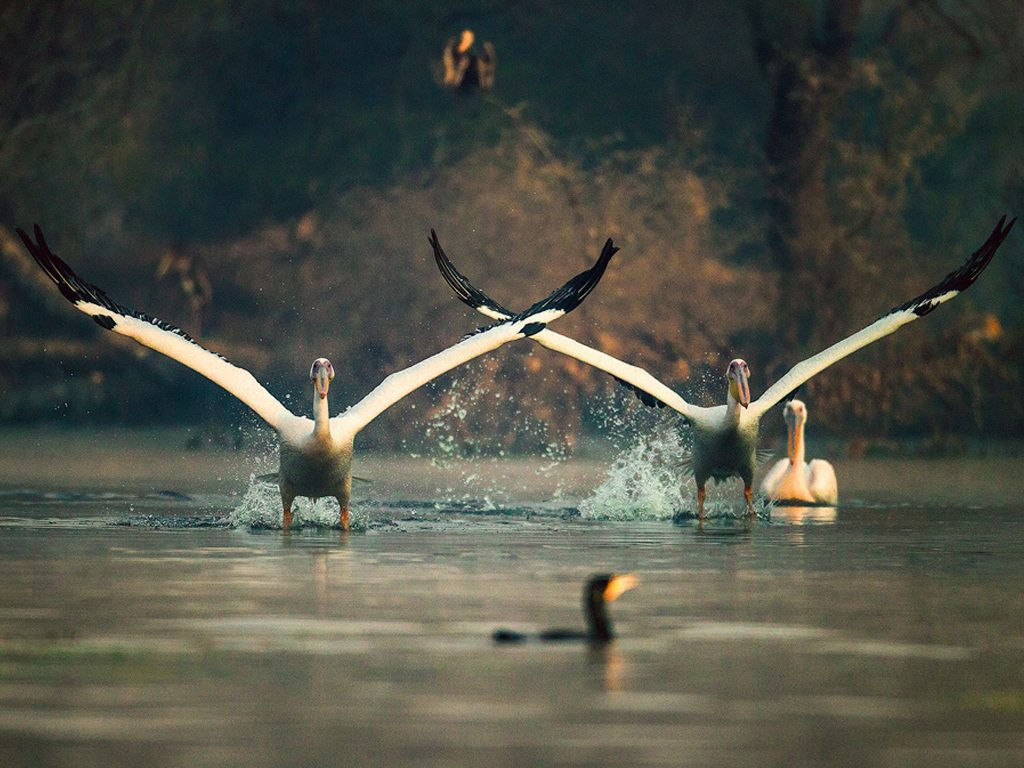 Water World: 9 Of India's Wetlands To Visit With Your Family