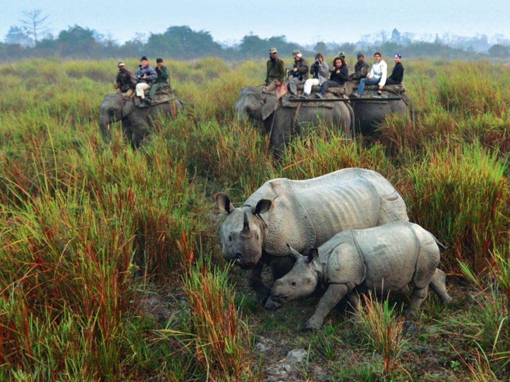 Rhino Kaziranga National Park Assam