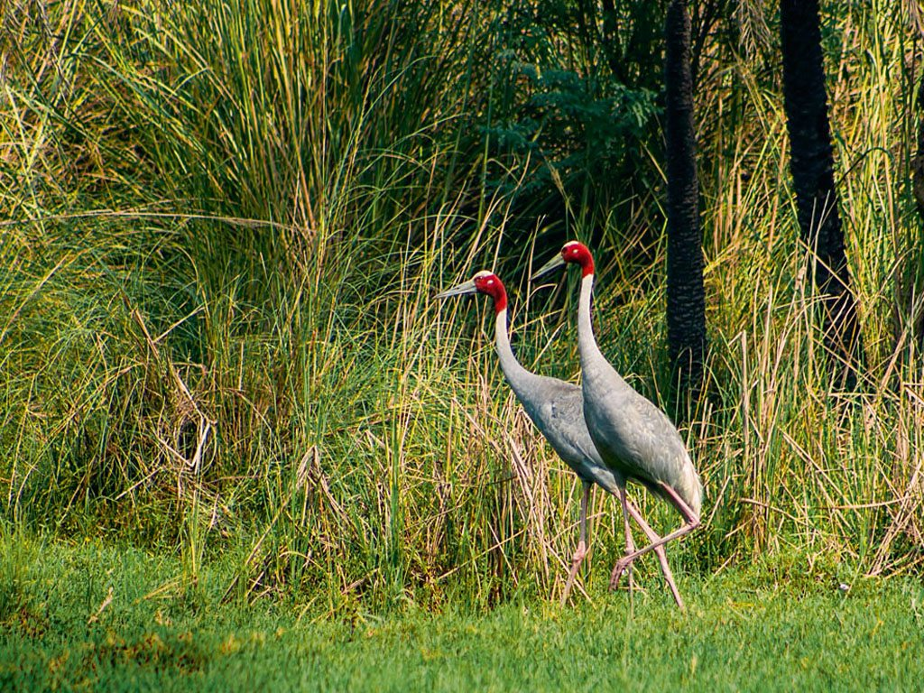 Surajpur Sarus Natural Forest