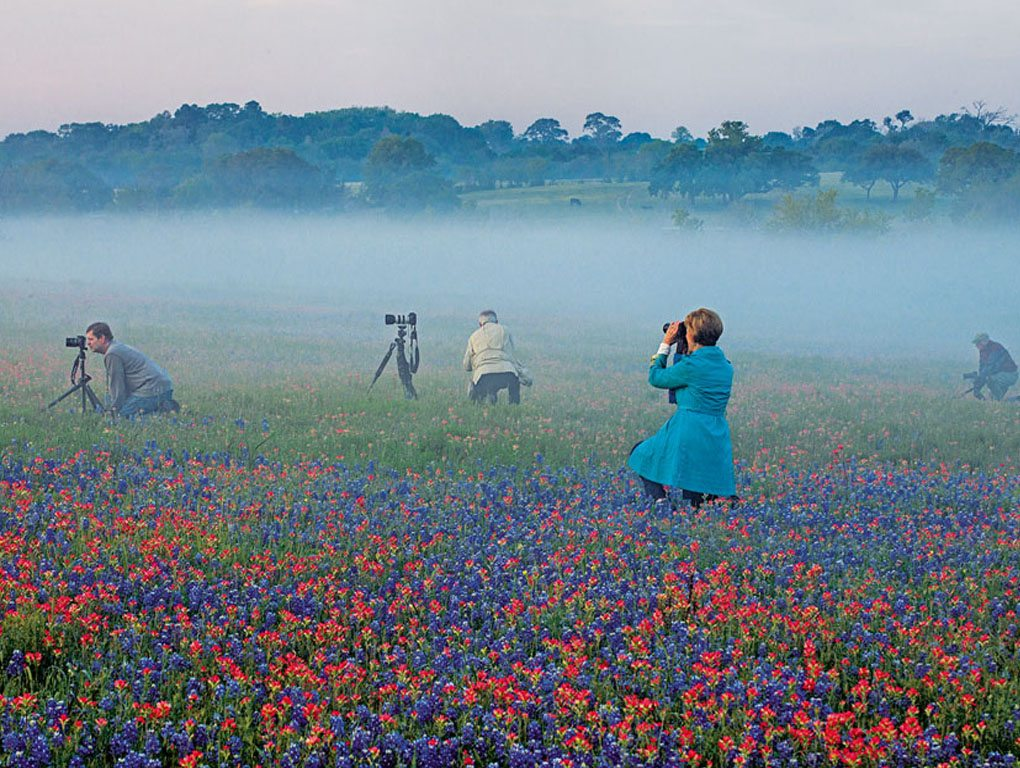 Texas's breathtaking wildflowers
